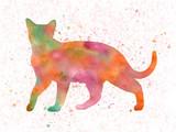 Fototapeta Dinusie - Burmes cat 15 in watercolor