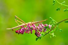 Beautiful Grasshopper Macro In...