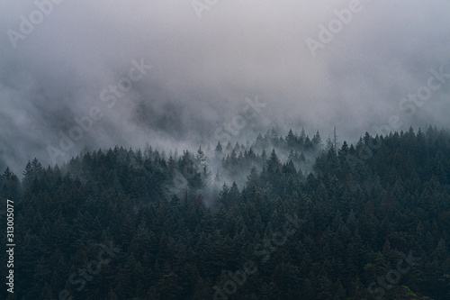 A beautiful view of the misty pacific northwest's forrest covered mountain range