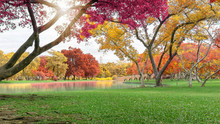 Autumn Colorful Leaves Trees W...