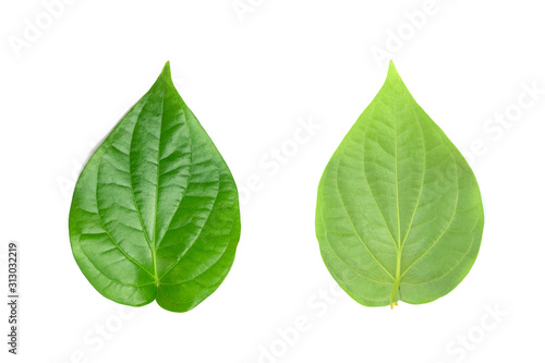 Green betel leaf on the white background. Wallpaper Mural