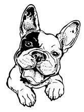 Happy French Bulldog Sketch