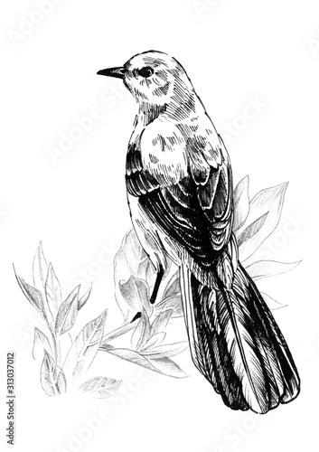 Photo Mockingbird sitting on a branch. Ink graphics.