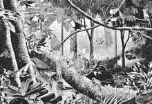 Digital Illustration Of A Jungle