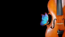 Violin Isolated On Black Close...
