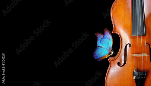 violin isolated on black closeup. beautiful blue butterfly morpho on violin. music concept. copy spaces