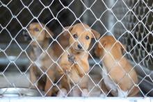 Several Sad Dog Puppies Locked...