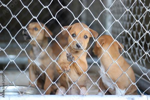 Obraz na plátně several sad dog puppies locked in the metal cage