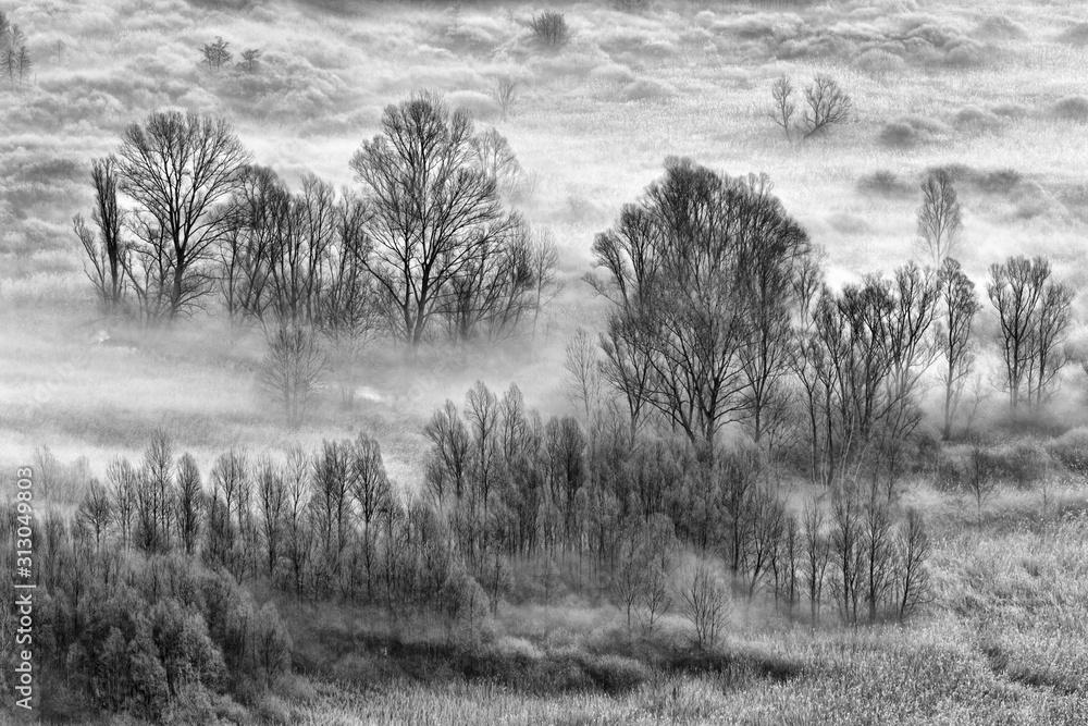 Fototapeta Beautiful dawn over the foggy trees