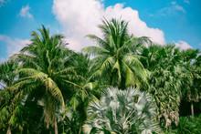 Palm Tree And Blue Sky