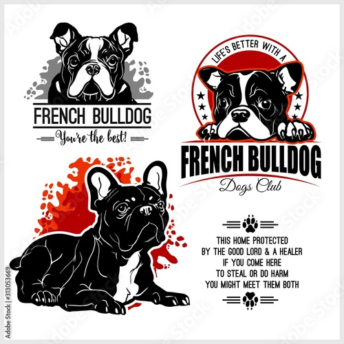 Fototapeta French Bulldog - vector set for t-shirt, logo and template badges obraz