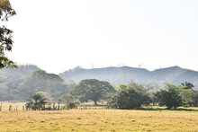 Tree In Field, Photo As A Back...