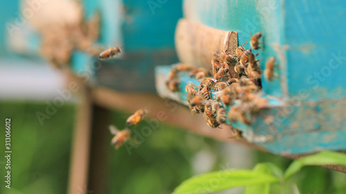 bees and beehive on outdoors Fototapet