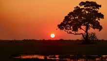 An African Sunset In The Okava...