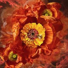 Flower Arrangement, Orange With Bumblebee