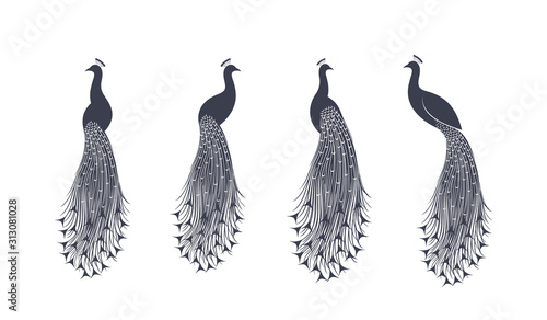 Stampa su Tela Peacock logo. Isolated peacock on white background