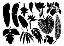 Tropical Plants, Exotic Flower...