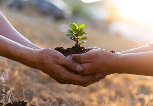 Fotomural Young seedlings are ready to grow in fertile soil, Agriculture gave the young men trees to prepare for planting and reduce global warming, Save world save life and Plant a tree concept