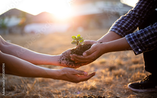 Fototapeta Young seedlings are ready to grow in fertile soil, Agriculture gave the young men trees to prepare for planting and reduce global warming, Save world save life and Plant a tree concept.. obraz