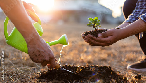 Obraz Two men are planting trees and watering them to help increase oxygen in the air, Save world save life and Plant a tree concept. - fototapety do salonu