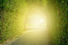Green Tunnel Of Trees With Lig...