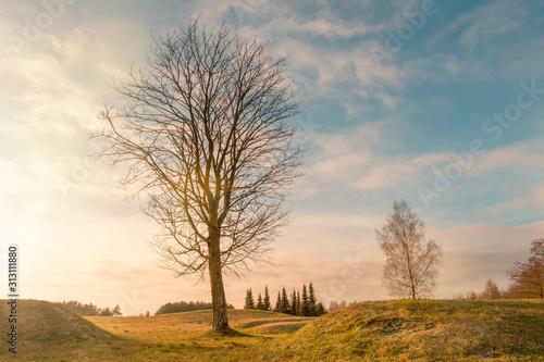 Valokuva Single bare tree in the park