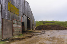 A Barn Full Of Cattle At A Working Farm In North Yorkshire, UK