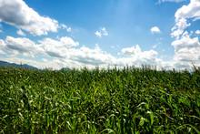 Sky Over Corn Field