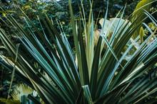 Tropical Flora Wallpaper. Bota...