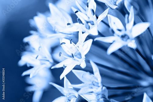 Fotomural  Abstract background with blosoom flowers in blue color