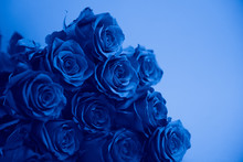 Bouquet Of Roses, Blue Toning,...