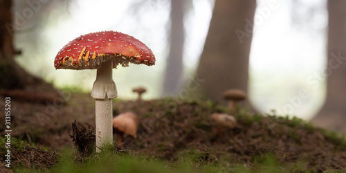 Photo big fly agaric close up in a forest 3