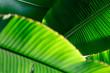canvas print picture - Exotisches, tropisches, abstraktes Blatt als Hintergrund
