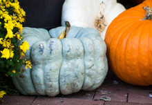 Different Colored Pumpkins On ...