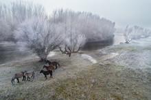 Horses In Winter Landscape Beside River