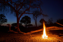 Evening Mood With Camp Fire, Khwai, Botswana