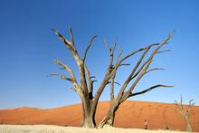 Dead Trees In Deadvlei, Sossusvlei, Namib Desert, Namibia