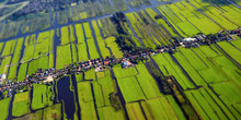 Aerial View Of Cultivated Agricultural Farming Land With Vivid Green Color As A Typical Dutch Canals Natural Irrigation System Shot From The Air With Tilt-shift Focus Effect