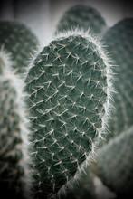 Kaktus Mit Stacheln Als Close ...
