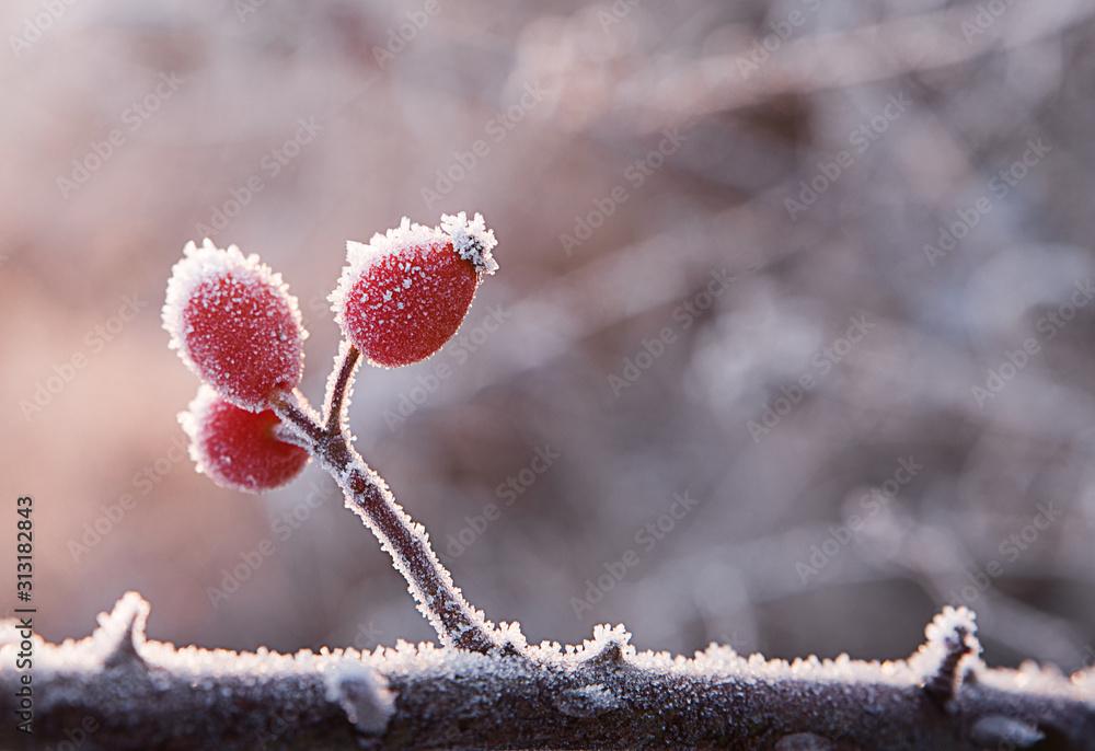 Fototapeta Pomegranate on a branch