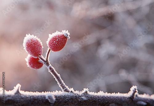 Fototapeta Pomegranate on a branch obraz