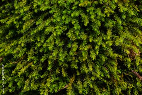 zielony-mokry-mech-z-bliska-w-gorach-kaukazu-koncentrujac-sie-na-mchu