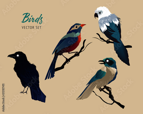 Photo Set of vector birds. Colourful hand drawn illustration