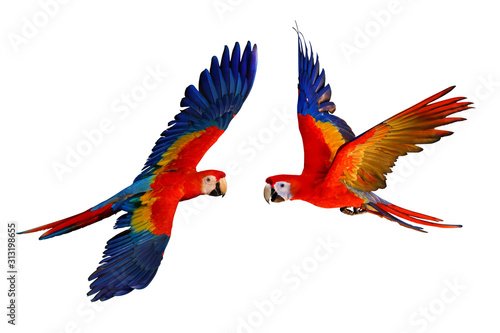 Photo Scarlet macaw parrot isolated on white background.