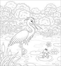 Big Heron And A Small Frog On A Lake Among Cane, Grass And Bushes Of A Summer Meadow, Black And White Vector Cartoon Illustration For A Coloring Book