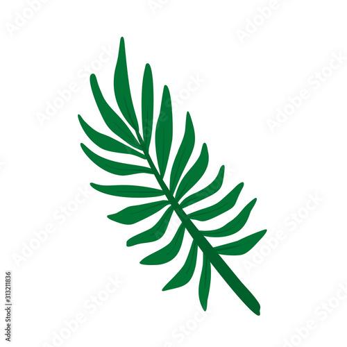 Areca palm leaf stylized vector illustration Canvas Print
