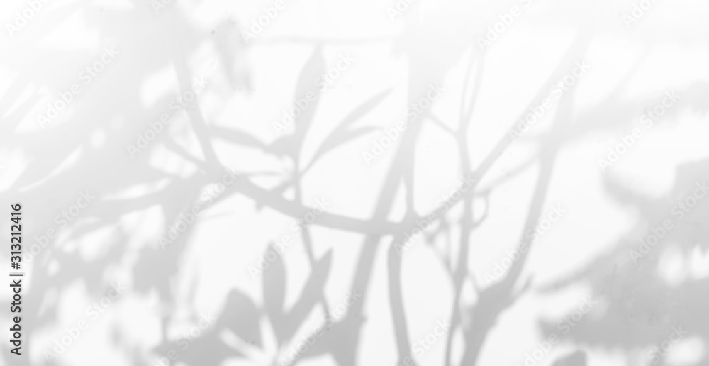 Fototapeta Abstract Shadows, blurred background of gray leaves and natural trees that reflect concrete walls, fallen branches on white wall surfaces for blurred backgrounds and black and white wallpapers.