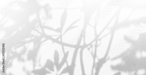 Obraz Abstract Shadows, blurred background of gray leaves and natural trees that reflect concrete walls, fallen branches on white wall surfaces for blurred backgrounds and black and white wallpapers. - fototapety do salonu