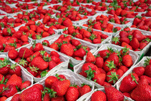 Lots Of Baskets With Fresh Strawberries For Sale At Farmers Market Close Up