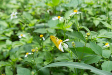 Butterfly Hidden Between Flowers In The Garden
